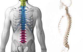 3 симптома гипертрофии желтых связок в спине — чем опасно?