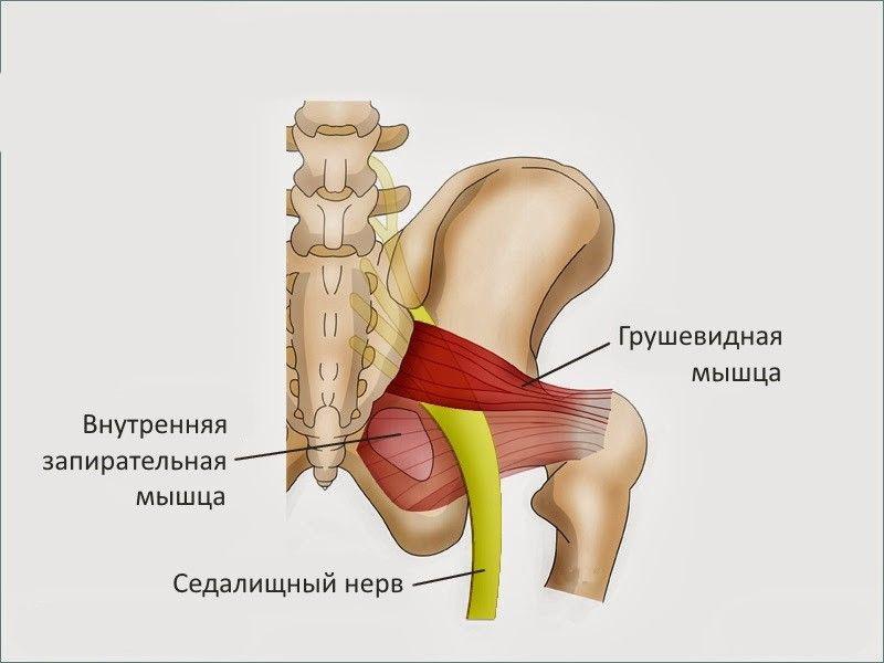 Боль в паху отдающая в поясницу боли в спине в паховой области у мужчин